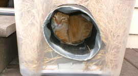 Shelter For Cats Wallpaper Download Free