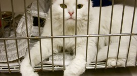 Shelter For Cats Wallpaper Gallery