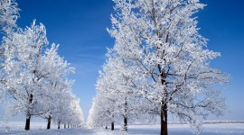 Snowy Winter Best Wallpaper