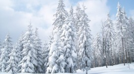 Snowy Winter Wallpaper 1080p