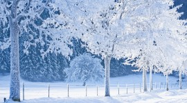Snowy Winter Wallpaper Download