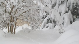 Snowy Winter Wallpaper Download Free