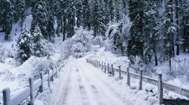 Snowy Winter Wallpaper Free