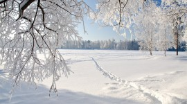 Snowy Winter Wallpaper Full HD