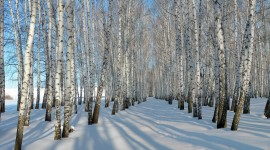 Snowy Winter Wallpaper Gallery