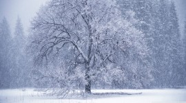 Snowy Winter Wallpaper High Definition