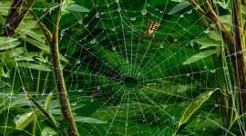 Spiderweb Best Wallpaper