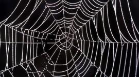 Spiderweb Desktop Wallpaper Free