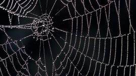 Spiderweb Desktop Wallpaper HD