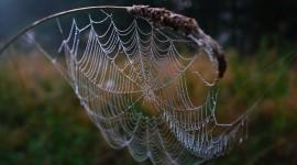 Spiderweb Desktop Wallpaper HQ