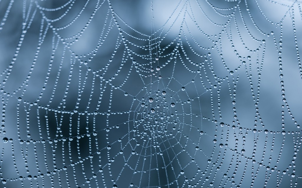 Spiderweb wallpapers HD