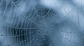 Spiderweb Wallpaper