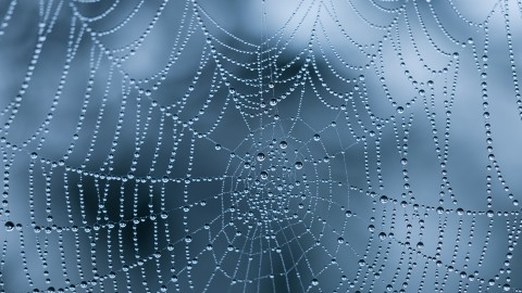 Spiderweb wallpapers high quality
