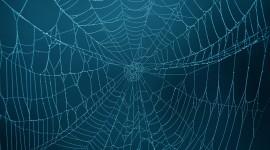 Spiderweb Wallpaper Background