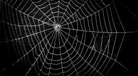 Spiderweb Wallpaper Download
