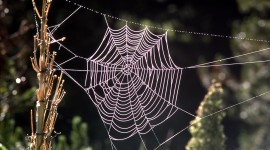 Spiderweb Wallpaper Download Free