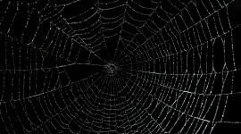 Spiderweb Wallpaper For Desktop