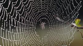 Spiderweb Wallpaper For PC