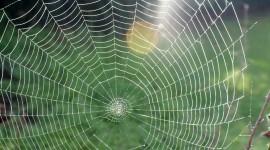 Spiderweb Wallpaper Free