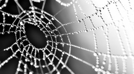 Spiderweb Wallpaper Full HD