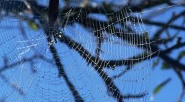 Spiderweb Wallpaper HD