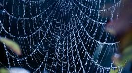 Spiderweb Wallpaper HQ