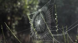 Spiderweb Wallpaper High Definition