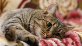 Striped Cat Wallpaper Free