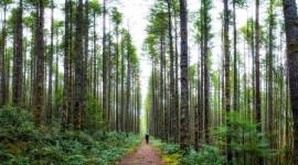 Tall Trees Best Wallpaper