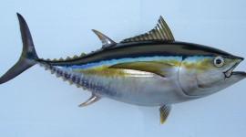 Tuna Wallpaper Background
