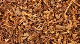 Tobacco Wallpaper Download Free