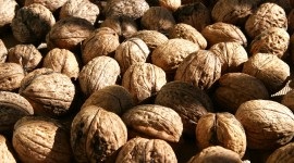 Walnuts Wallpaper For Desktop