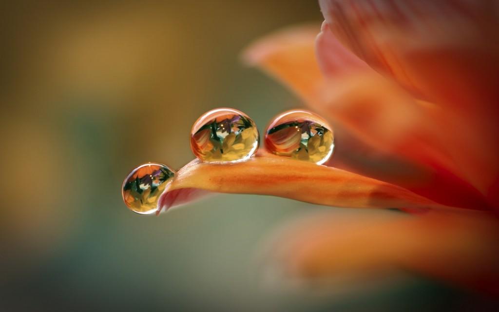 Water Drop wallpapers HD