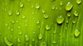 Water Drop Wallpaper Download Free