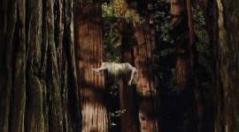 Woodshock Best Wallpaper