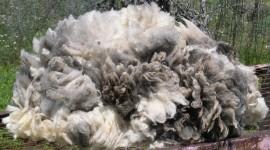 Wool Wallpaper Download Free