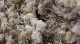 Wool Wallpaper For Desktop