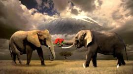 4K Elephant Photo Free