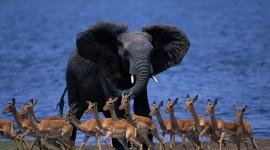 4K Elephant Photo#1