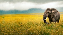 4K Elephant Wallpaper Download