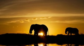 4K Elephant Wallpaper Download Free