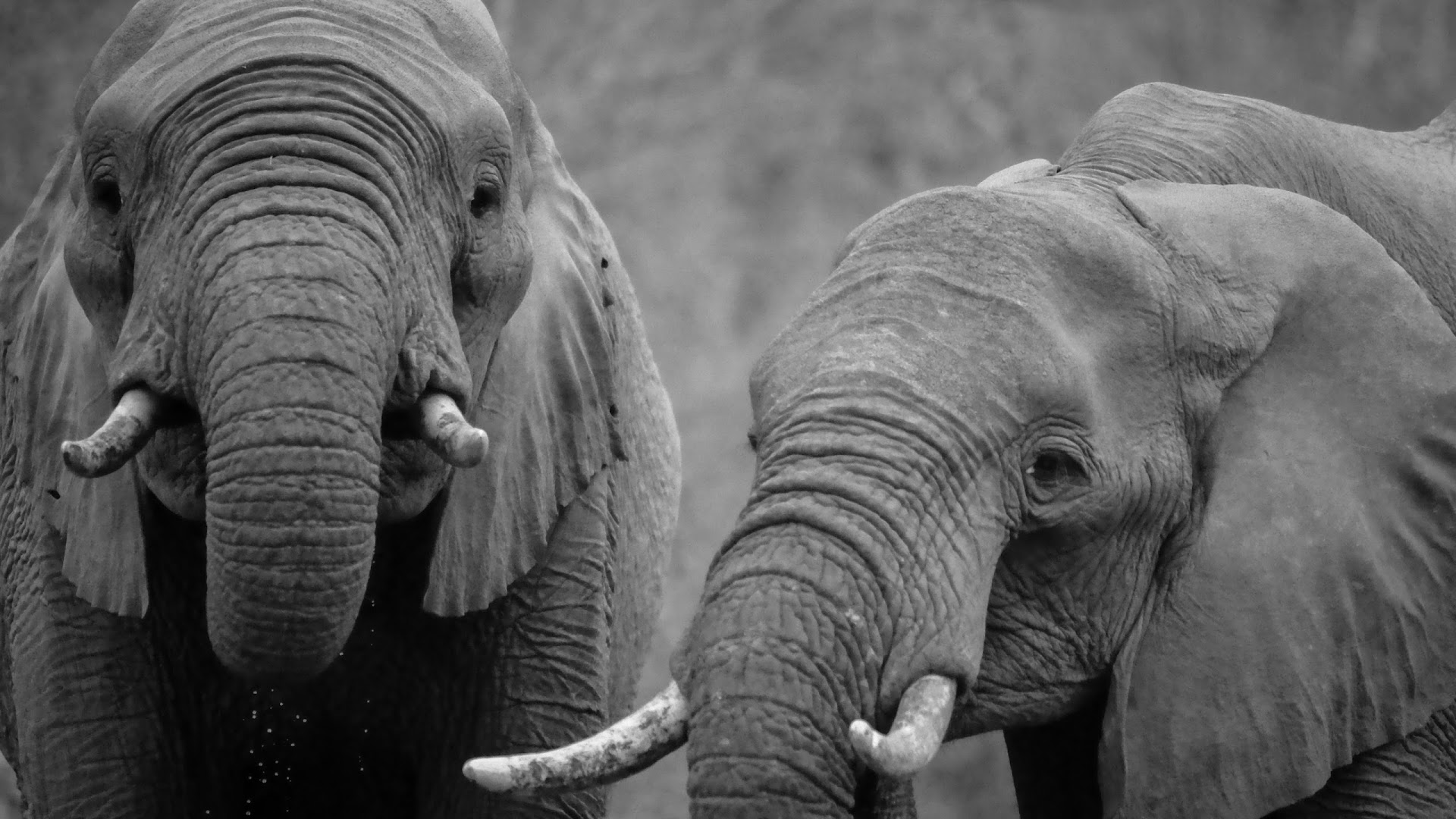 4K Elephant Wallpapers High Quality | Download Free