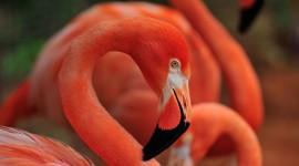 4K Flamingo Best Wallpaper