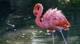 4K Flamingo Desktop Wallpaper For PC