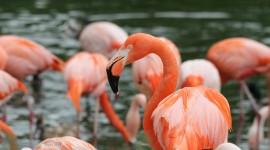 4K Flamingo Desktop Wallpaper HD