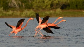 4K Flamingo Desktop Wallpaper#1