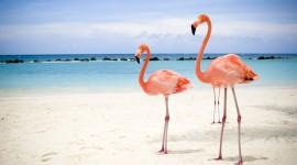 4K Flamingo Photo