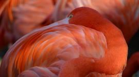 4K Flamingo Photo Download