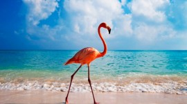 4K Flamingo Photo Free