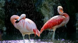 4K Flamingo Wallpaper 1080p